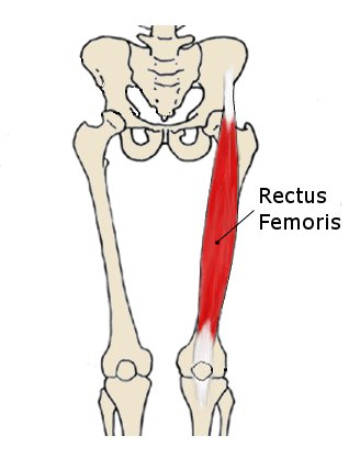 pain at the front of the hip - sartorius & psoas strain causes and, Human Body